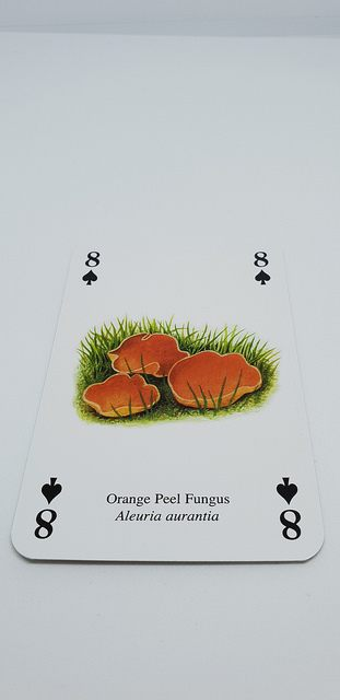 A Great Gift For Mushroom Enthusiasts | Mushroom Playing Cards Archers Mushrooms | Mushroom Blogs | Mushroom Growing | Mushroom Tips | Mushroom Business