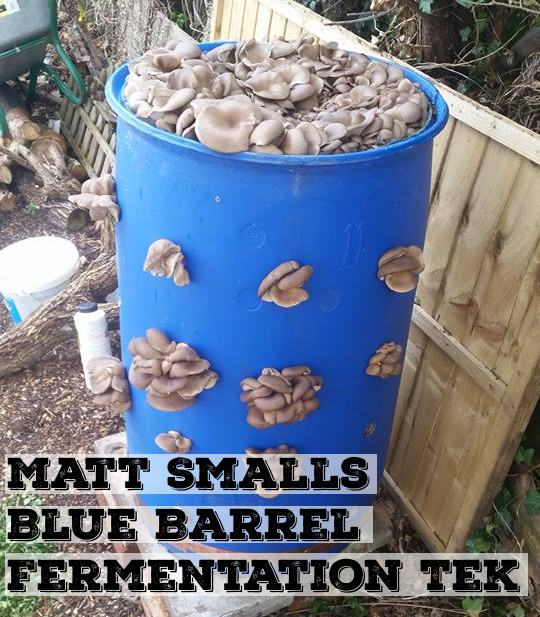 Matt Smalls Blue Barrel Fermentation Tek | Archers Mushrooms | Mushroom Blogs | Mushroom Growing | Mushroom Tips | Mushroom Business