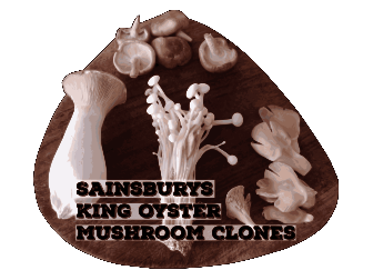 Sainsbury's Exotic Mushrooms | Archer's Mushrooms | King Oyster | Shiitake | Oyster | Enoki