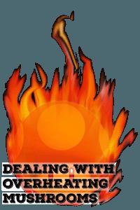 Dealing With Overheating Mushrooms | | Archers Mushrooms | Mushroom Blogs | Mushroom Growing | Mushroom Tips | Mushroom Business