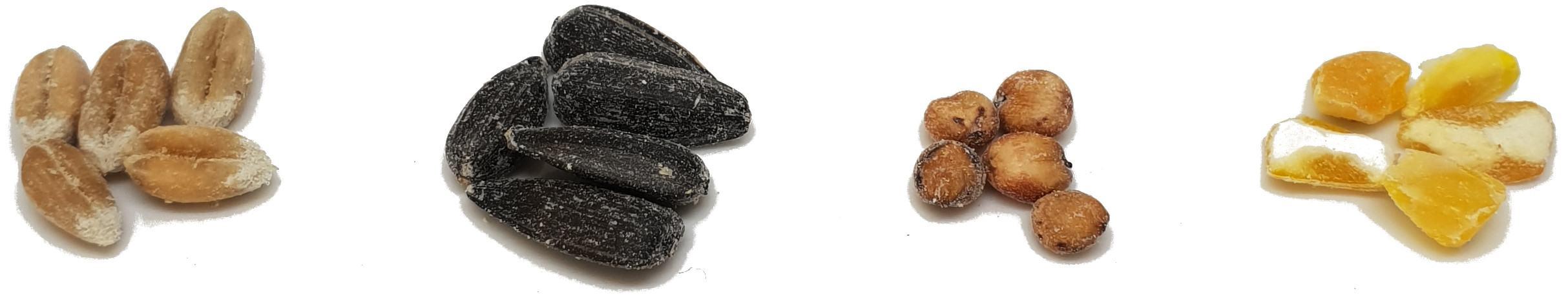 Different Types Of Grain Spawn For Mushroom Growing   Mushroom Blogs   Mushroom Growing   Mushroom Tips   Mushroom Business