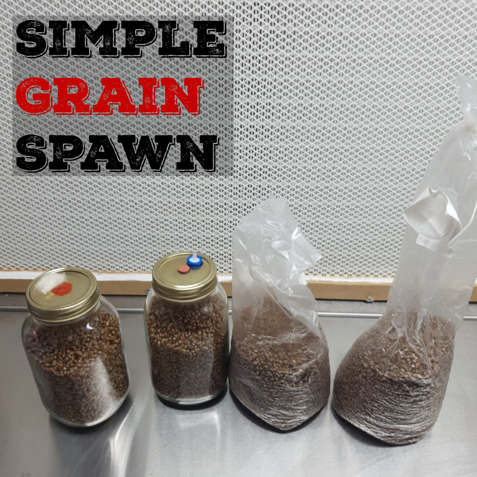 Simple Grain Spawn | Mushroom Grain Spawn | How To Make Mushroom Grain Spawn | Wheat Berry Spawn | Archers Mushrooms | Mushroom Blogs | Mushroom Growing | Mushroom Tips | Mushroom Business