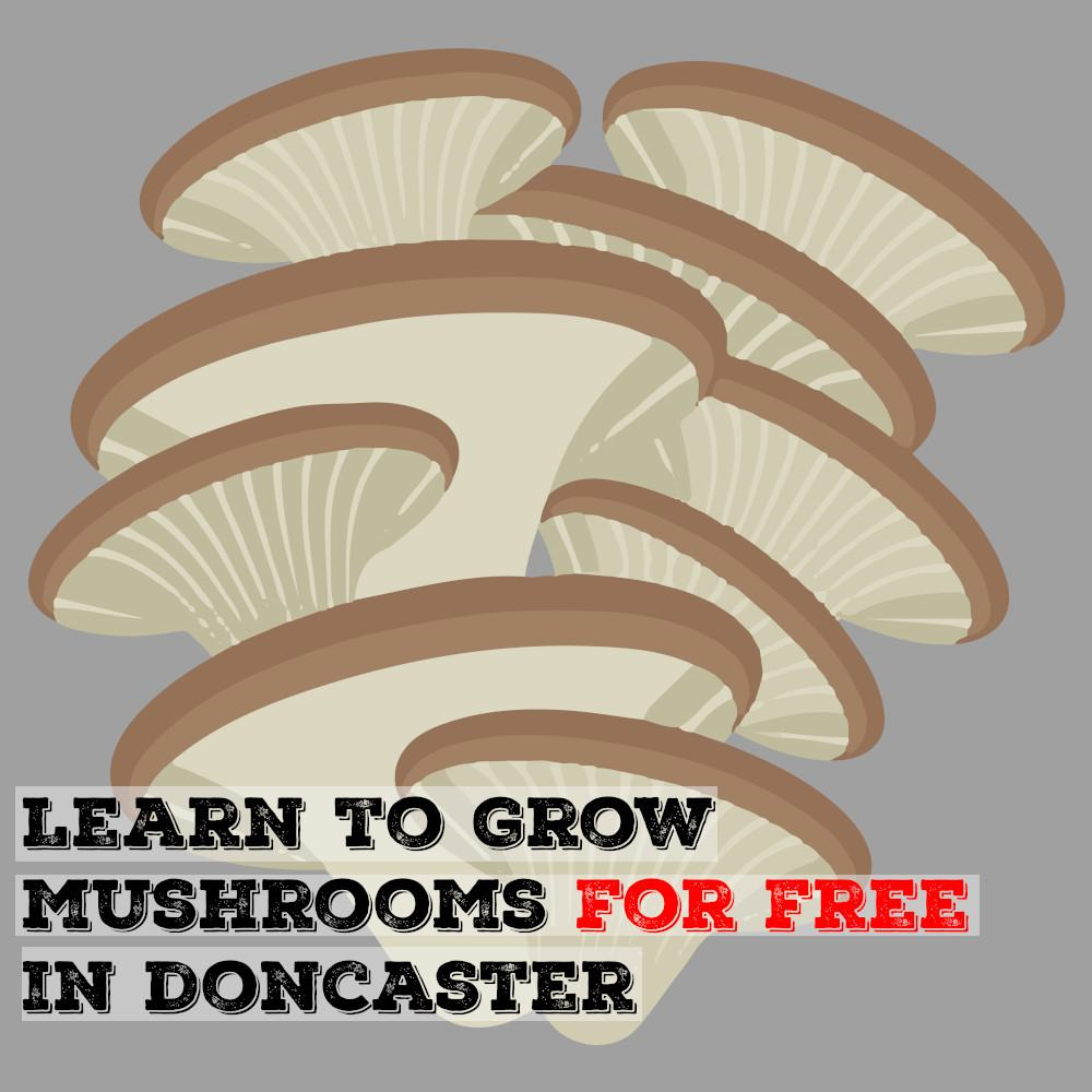 Learn To Grow Mushrooms For Free In Doncaster | Mushroom Blogs | Mushroom Growing | Mushroom Tips | Mushroom Business