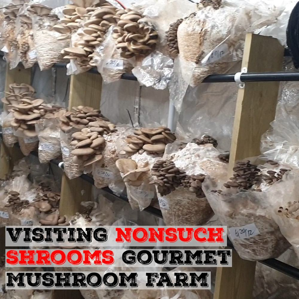 NonSuch Mushrooms | Gourmet Mushroom Growing Company | Archers Mushrooms | Mushroom Blogs | Mushroom Growing | Mushroom Tips | Mushroom Business
