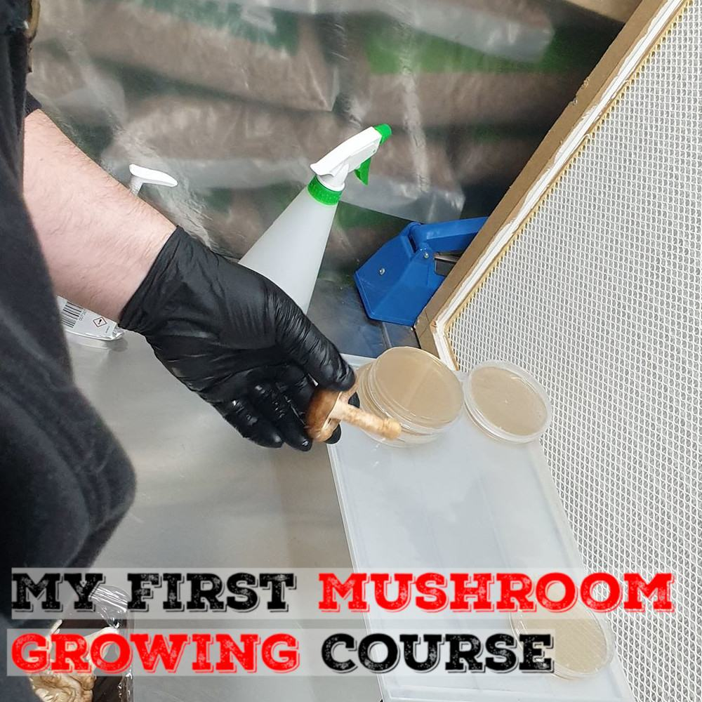 My First Ever Mushroom Growing Course | Archers Mushrooms | Mushroom Blogs | Mushroom Growing | Mushroom Tips | Mushroom Business
