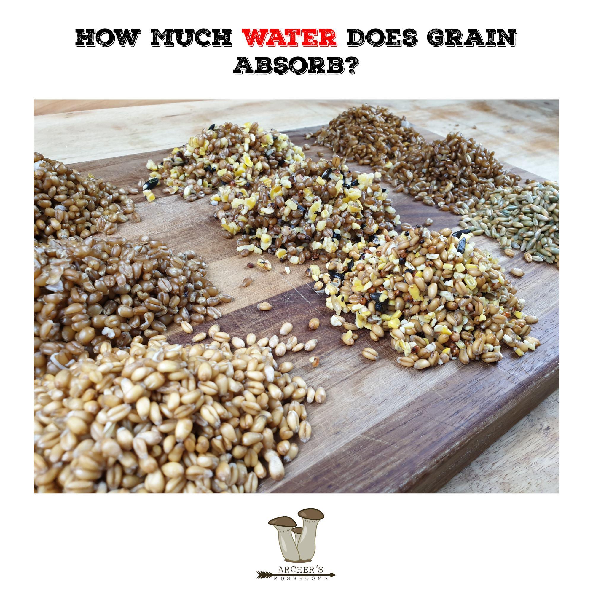 How Much Water Does Grain Absorb? | Mushroom Growing | Mushroom Blogs | Mushroom Growing | Mushroom Tips | Mushroom Business