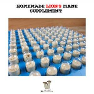 Homemade Lion's Mane Supplement. How I Made Lion's Mane Capsules.| Mushroom Growing | Mushroom Blogs | Mushroom Growing | Mushroom Tips | Mushroom Business