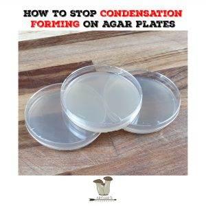 How To Stop Condensation Forming On Agar Plates | The Best Mushroom Foraging Books | Mushroom Growing | Mushroom Blogs | Mushroom Growing | Mushroom Tips | Mushroom Business
