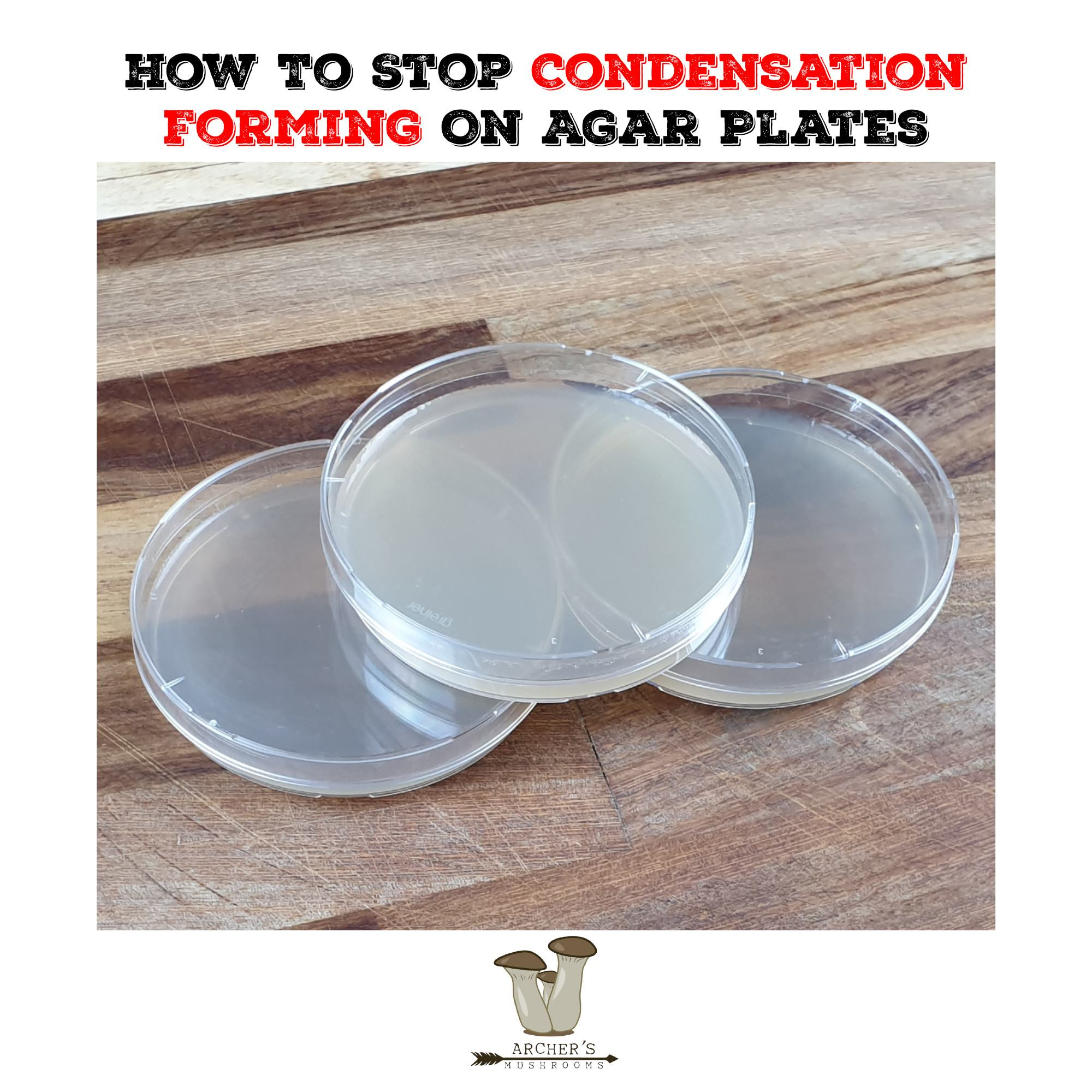 How To Stop Condensation Forming On Agar Plates | The Best Mushroom Foraging Books | Mushroom Growing | Mushroom Blogs | Mushroom Growing | Mushroom Tips | Mushroom Business