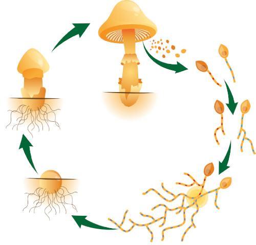 How Do Mushrooms Grow? | Mushroom Growing | Mushroom Blogs | Mushroom Growing | Mushroom Tips | Mushroom Business